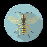 vcela-a-zahadlovy-hmyz