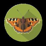 ze-zivota-hmyzu